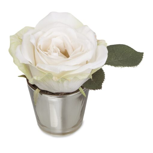 White Rose in Pot